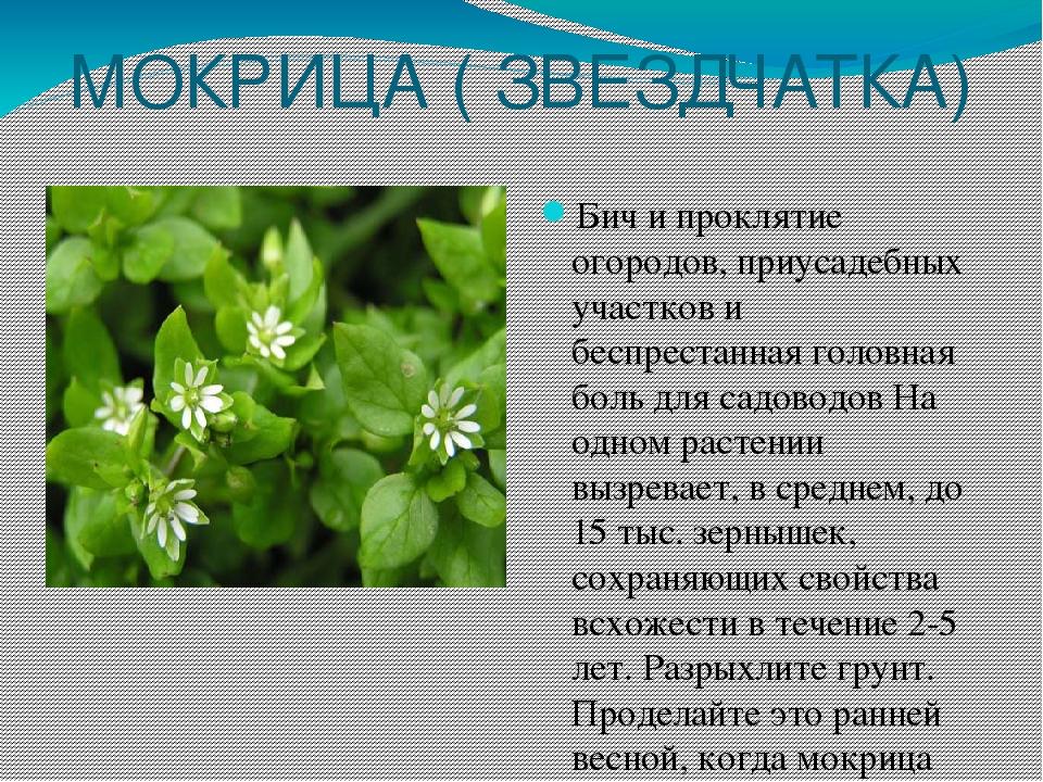 срезать картинки сорных растений с названиями признать, что