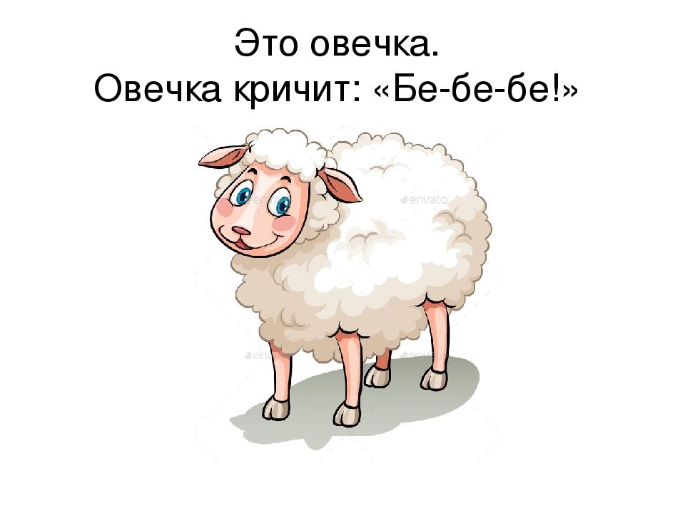 Ты овца в картинках