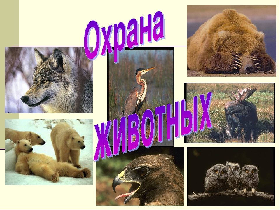 Картинки охрана животных картинки