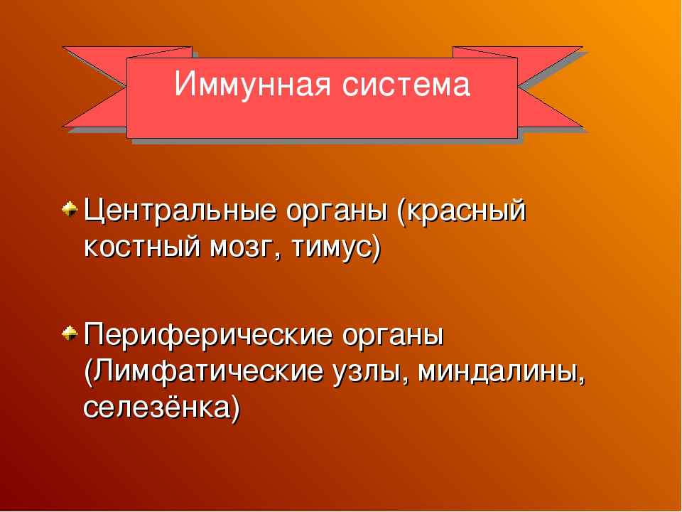 Центральные органы (красный костный мозг, тимус) Периферические органы (Лимф...