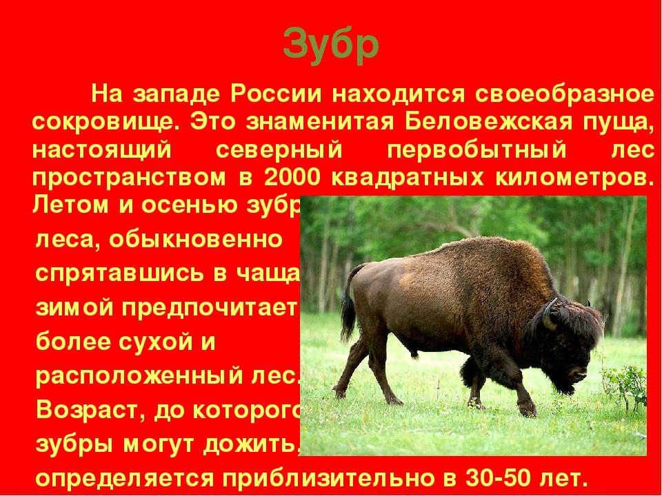 Зубр из красной книги россии доклад