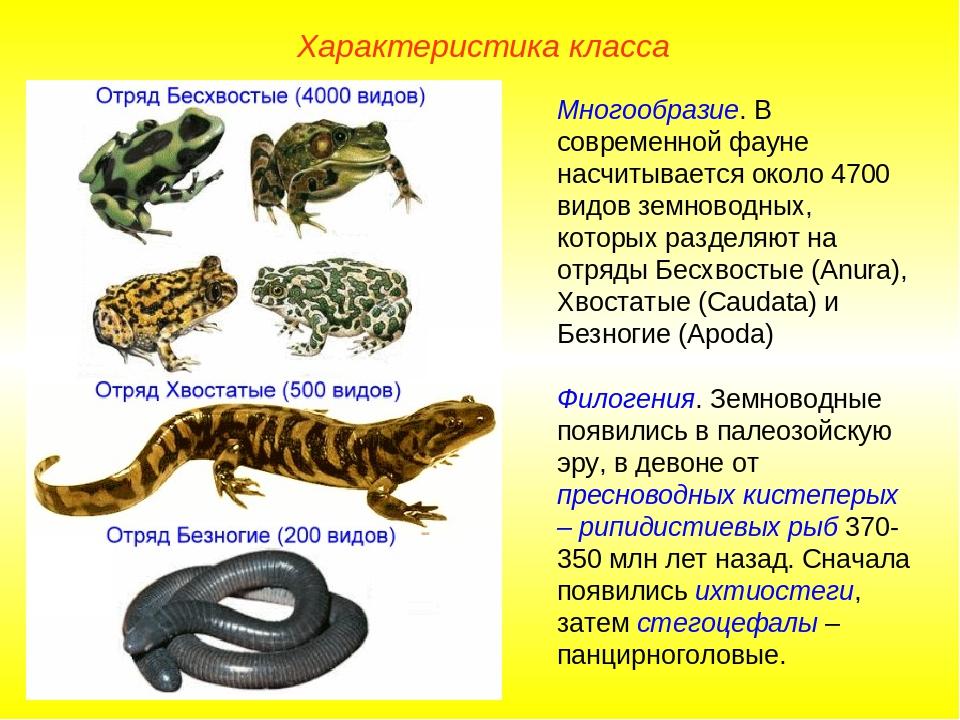 Характеристика класса Многообразие. В современной фауне насчитывается около 4...