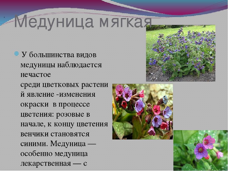 Псковский кремль описание и фото свойства