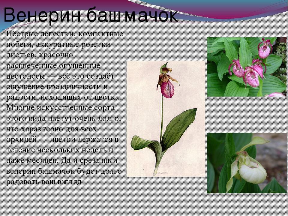 растения оренбургской области фото с названиями и описанием школы брали негров