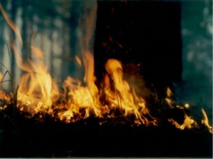 По скорости распространения огня (продвижения кромки пожара) и высоте пламени