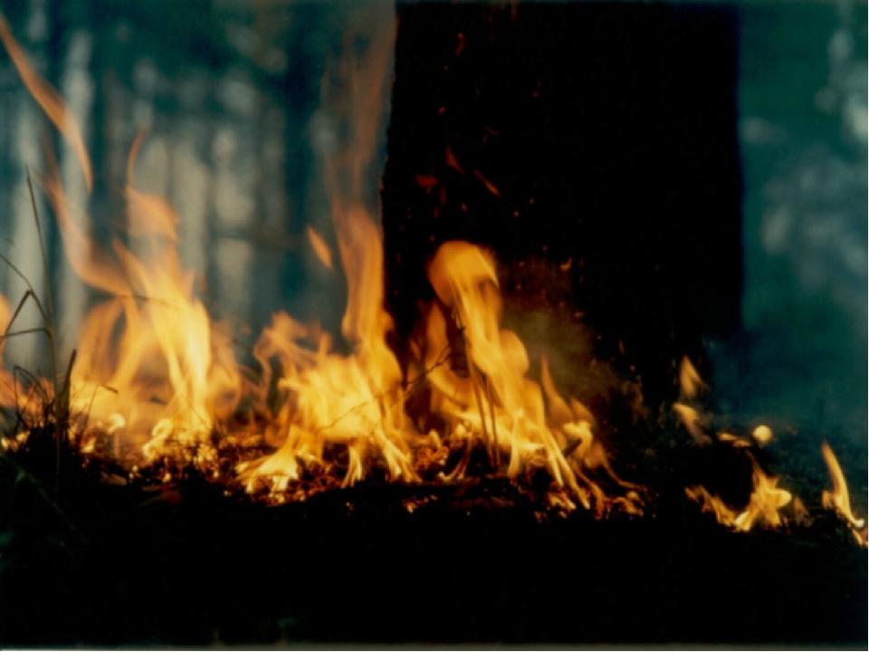 По скорости распространения огня (продвижения кромки пожара) и высоте пламени...