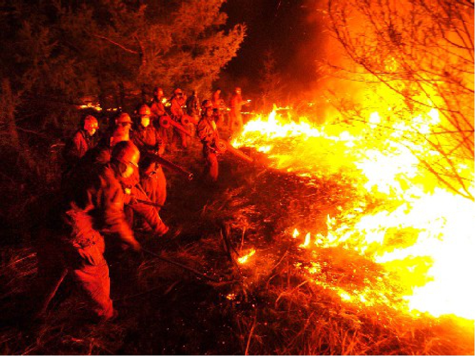 Если пожар распространился на значительную площадь, его оцепляют и каждому че...