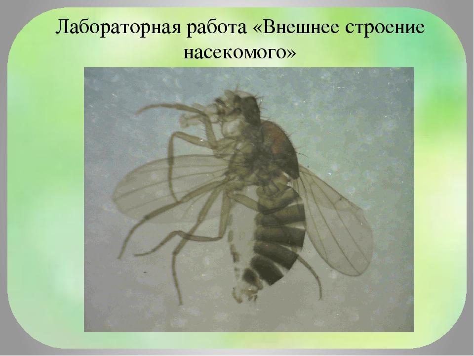 Лабораторная работа «Внешнее строение насекомого»