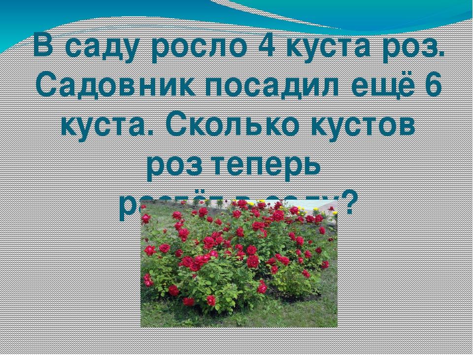 В саду росло 4 куста роз. Садовник посадил ещё 6 куста. Сколько кустов роз те...