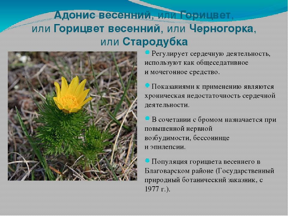 это быть растения башкортостана фото собственных образовательных