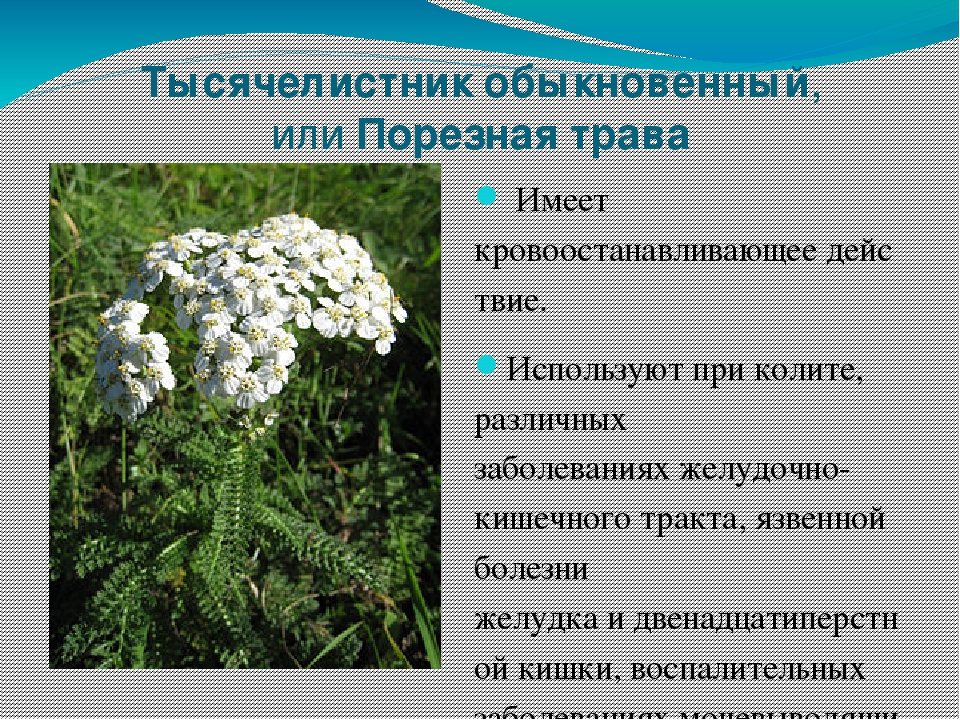 травы саратовской области названия и фото особенно красив