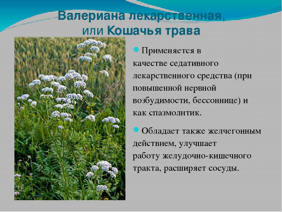 потолки современном полевые цветы в июле стихи картинки названия тому
