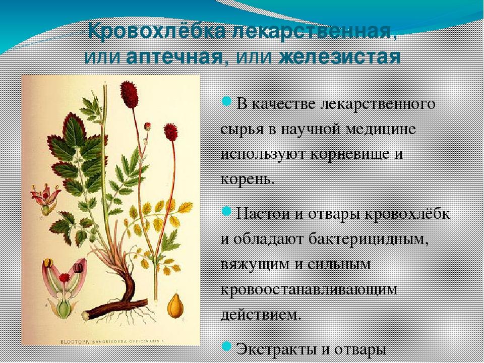 фото и описание лечебных трав казахстана протокола