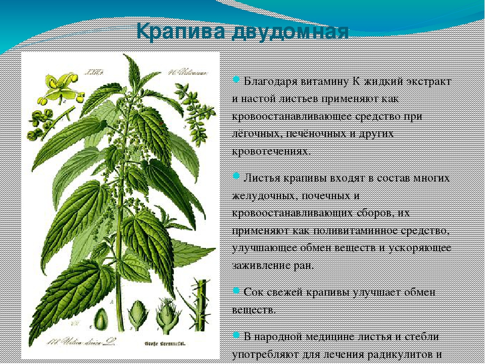 Фото и описание лечебных трав казахстана