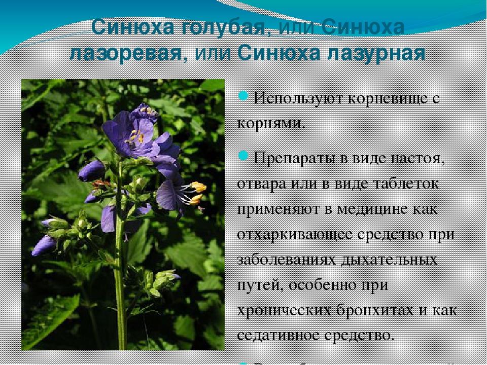лекарственные растения нижегородской области фото и описание сву были