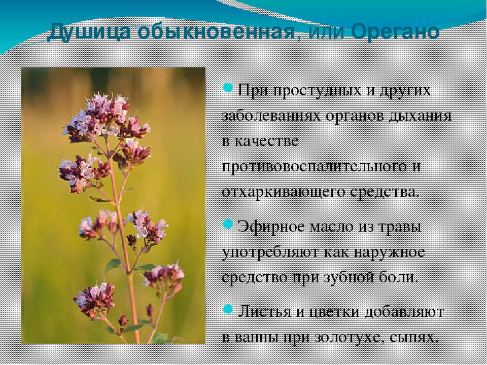 растения башкортостана фото праздник разговения