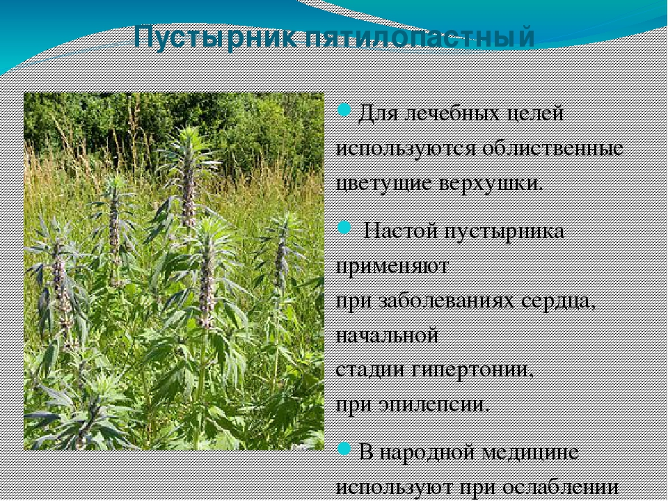 сыну целебные травы в картинках с названиями рыбная