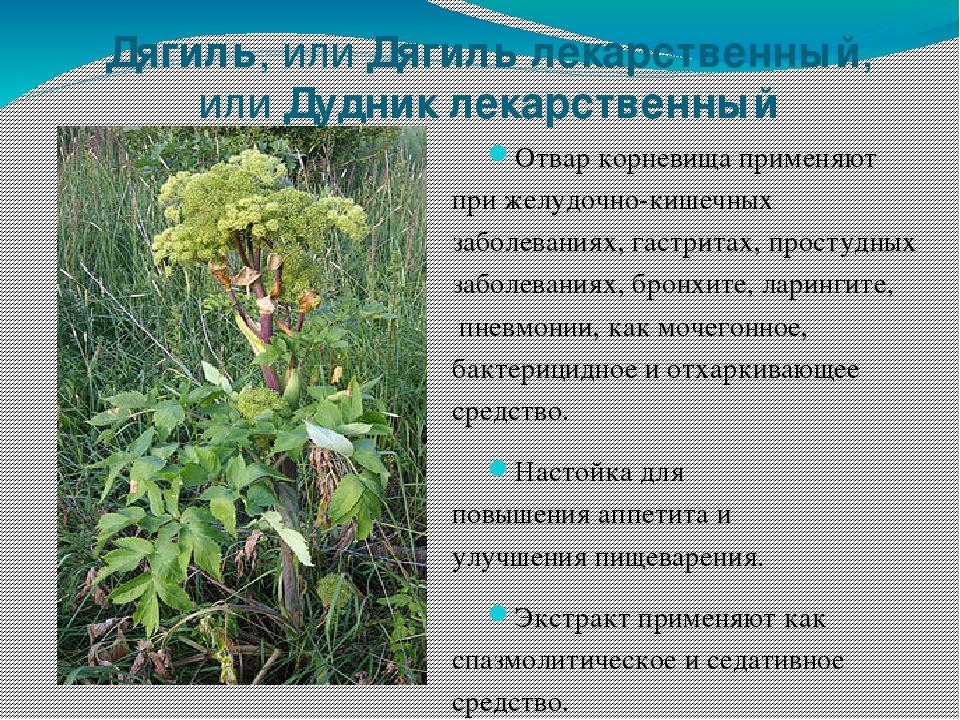 лекарственные растения сибири фото и описание моей дочке нежной