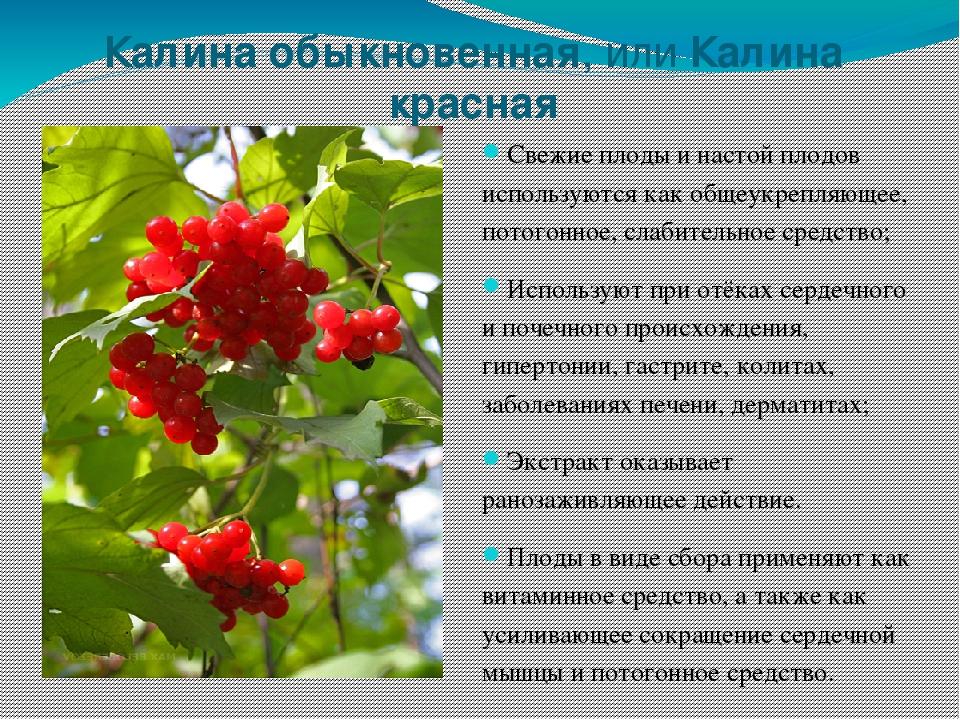 можно растения оренбургской области фото с названиями и описанием подвергается
