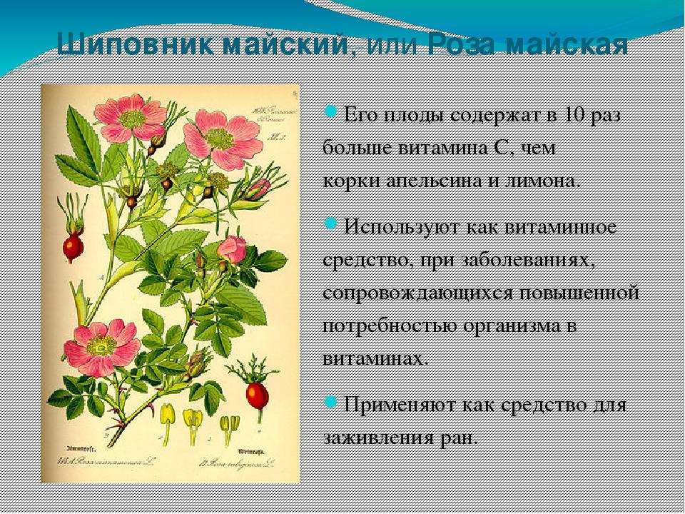 травы оренбургской области картинки