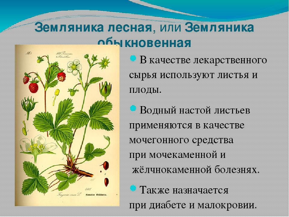 около человек справочник лечебных трав в картинках хлебница это пекарня