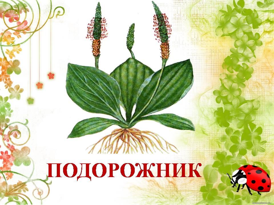 Картинки с надписью растения, днем