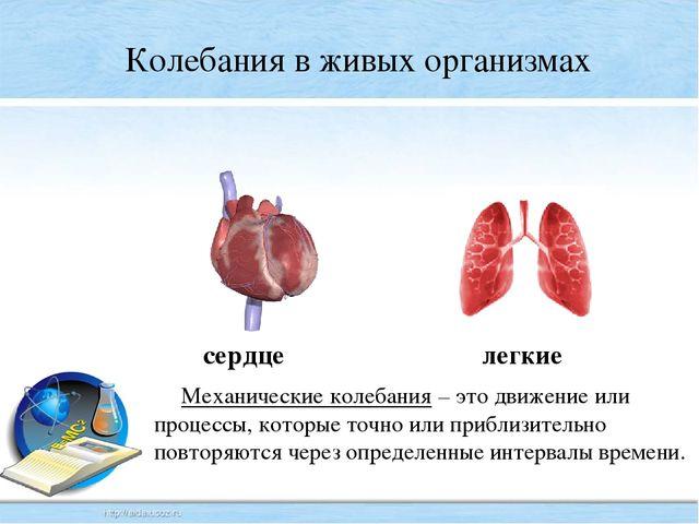 Колебания в живых организмах сердце легкие Механические колебания – это движ...