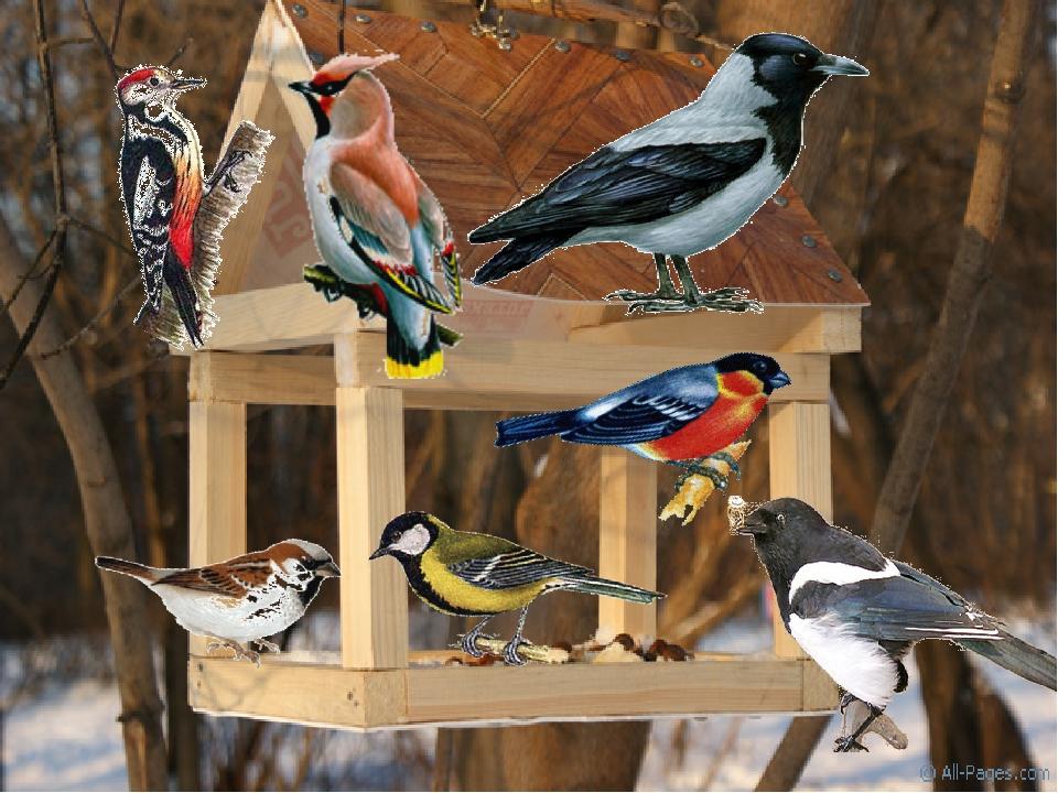 посмотреть картинки зимующие птицы санатория киргизское взморье