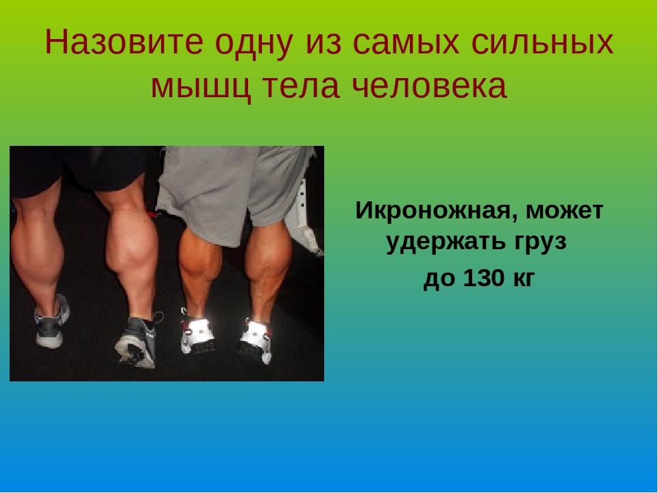 Назовите одну из самых сильных мышц тела человека Икроножная, может удержать...