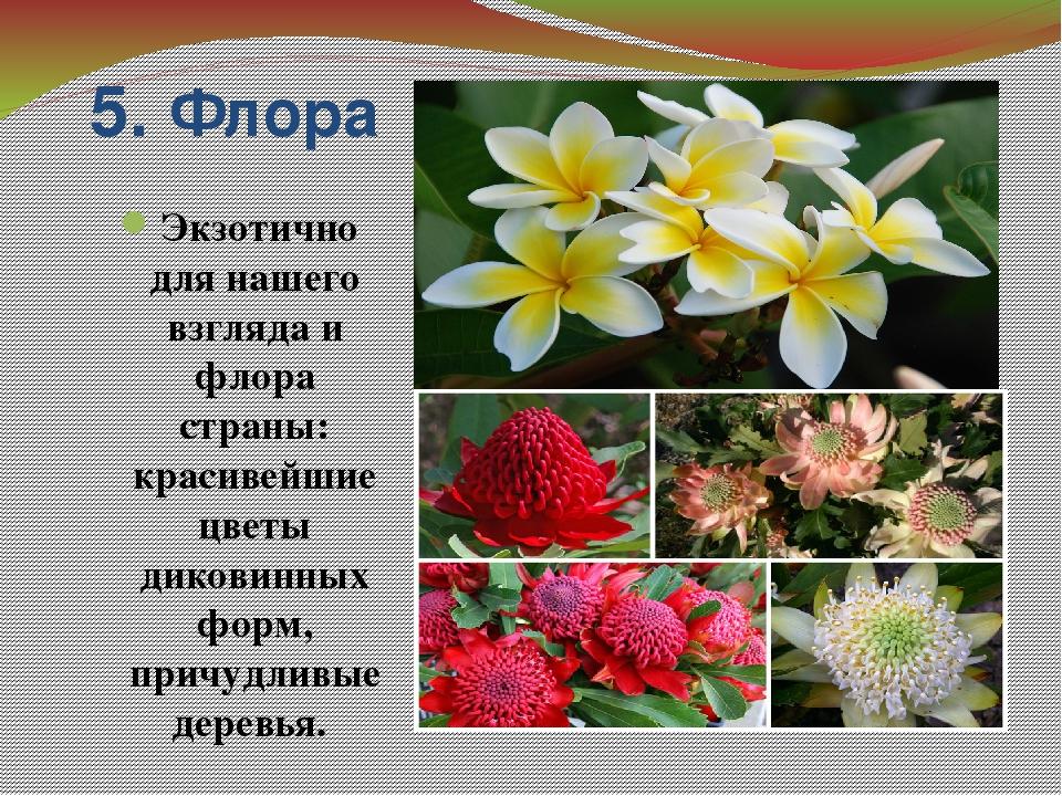5. Флора Экзотично для нашего взгляда и флора страны: красивейшие цветы диков...