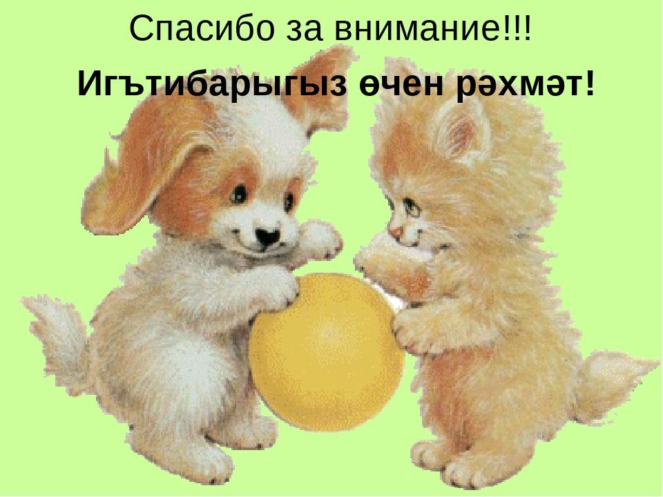 Анимашки щенков и котят картинки