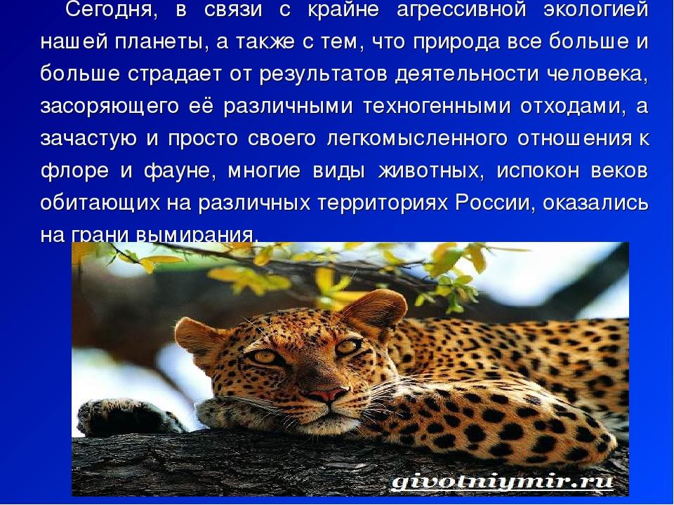 Доклад о животных нижегородской области 3265