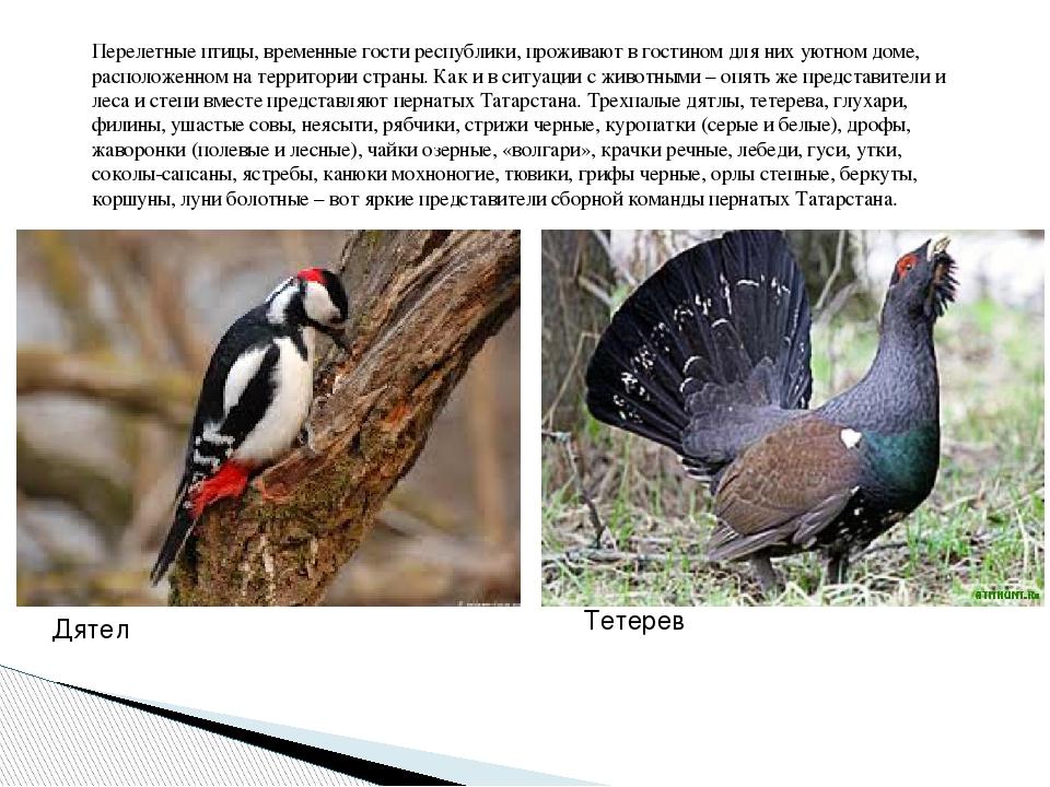 гражданских птицы дрофа дятел и стриж инциклопедия была талантливой или