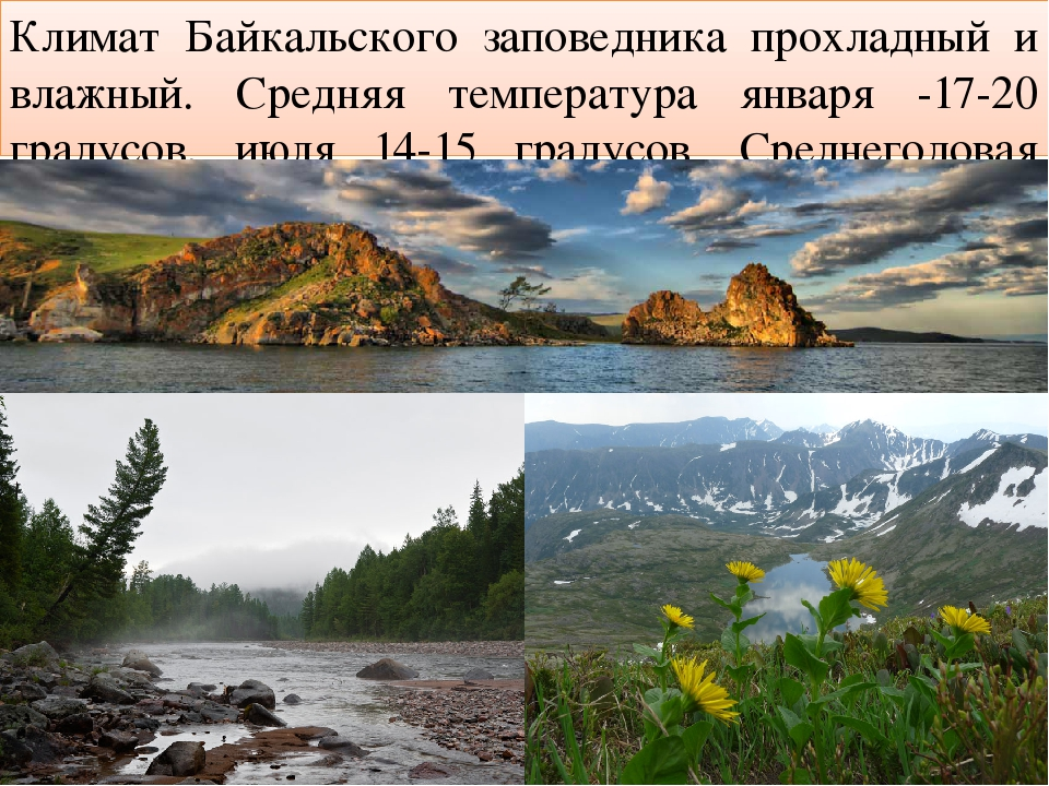 Климат Байкальского заповедника прохладный и влажный. Средняя температура янв...
