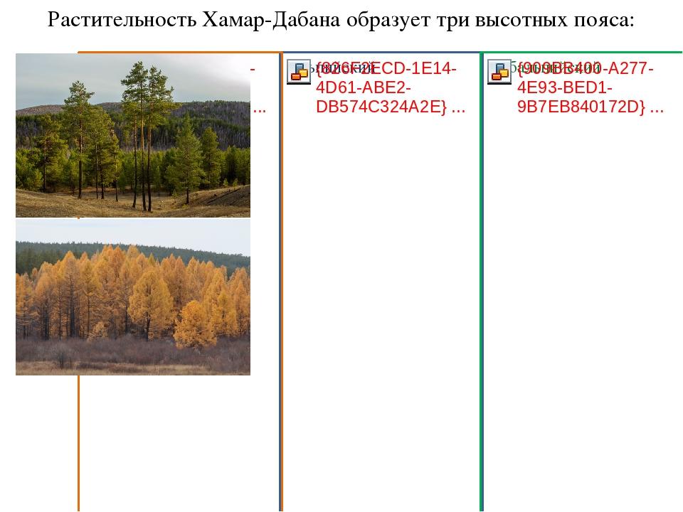 Растительность Хамар-Дабана образует три высотных пояса: