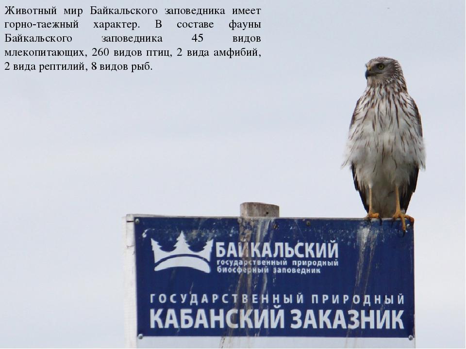 Животный мир Байкальского заповедника имеет горно-таежный характер. В составе...