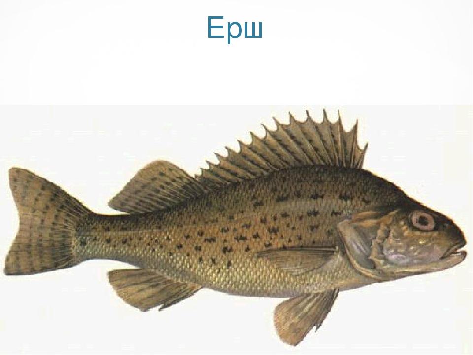 церковь рыба буква фото большинства пациентов