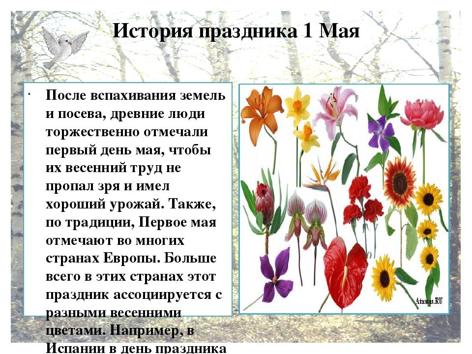История праздника 1 Мая После вспахивания земель и посева, древние люди торже...