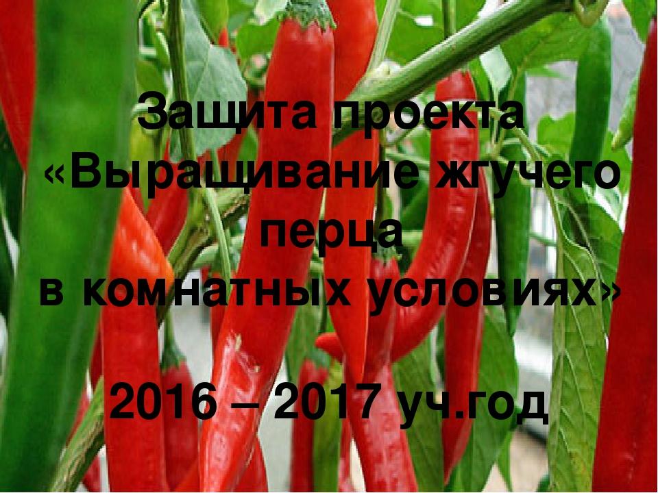Защита проекта «Выращивание жгучего перца в комнатных условиях» 2016 – 2017...