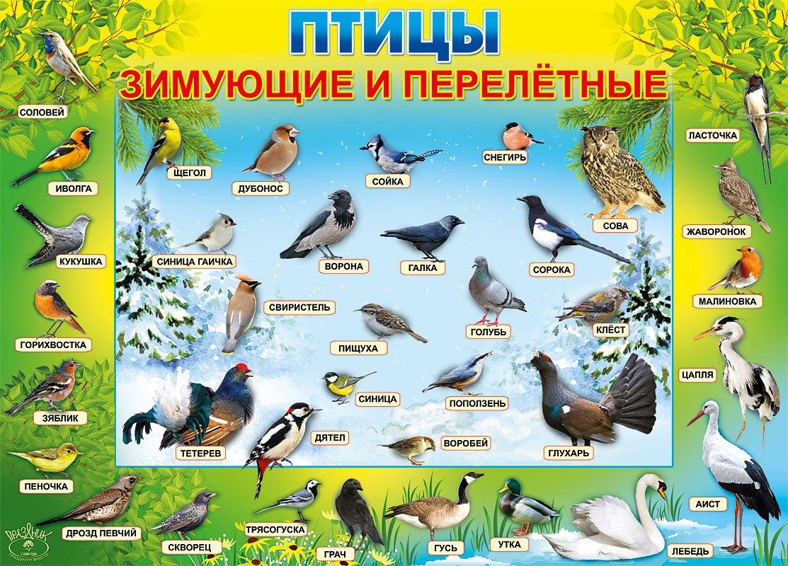 Картинки перелетных птиц для детей
