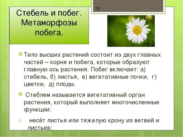 К спорным растениям имеющим развития корней стебля и листья