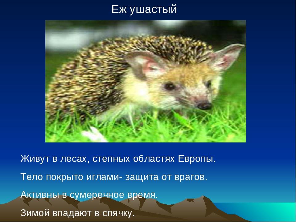 Еж ушастый Живут в лесах, степных областях Европы. Тело покрыто иглами- защит...