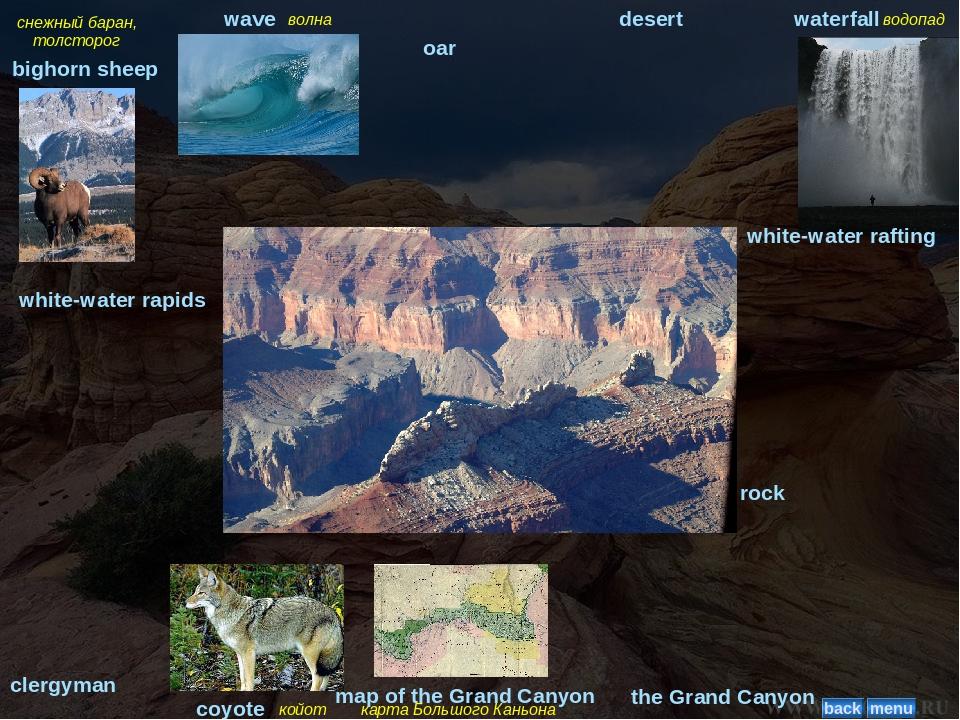 снежный баран, толсторог bighorn sheep волна wave oar desert водопад waterfal...