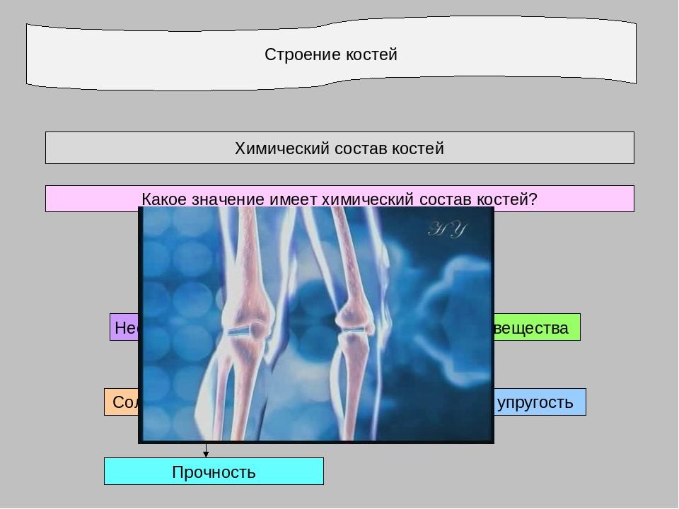 Строение костей Химический состав костей Какое значение имеет химический сост...