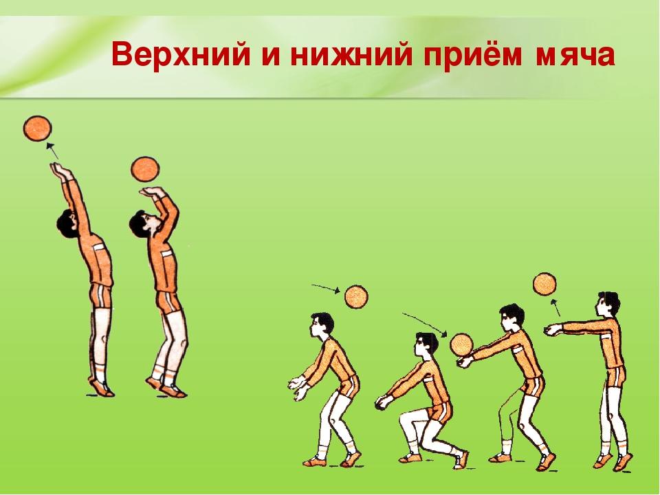 прием мяча волейбол картинки прессы