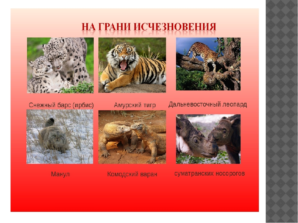Красная книга с животными своими руками 13