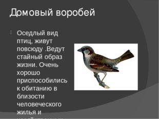 Домовый воробей Оседлый вид птиц, живут повсюду .Ведут стайный образ жизни. О