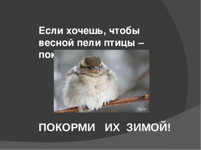 Если хочешь, чтобы весной пели птицы – покормите их зимой. ПОКОРМИ ИХ ЗИМОЙ!