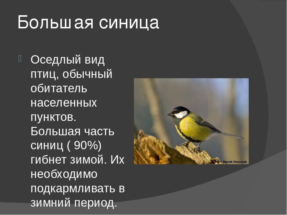Большая синица Оседлый вид птиц, обычный обитатель населенных пунктов. Больша...