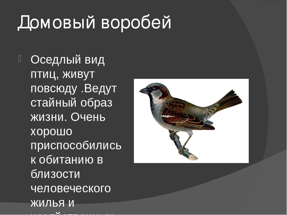 Домовый воробей Оседлый вид птиц, живут повсюду .Ведут стайный образ жизни. О...